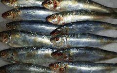 Peixe Sardinha – Benefícios Para a Saúde