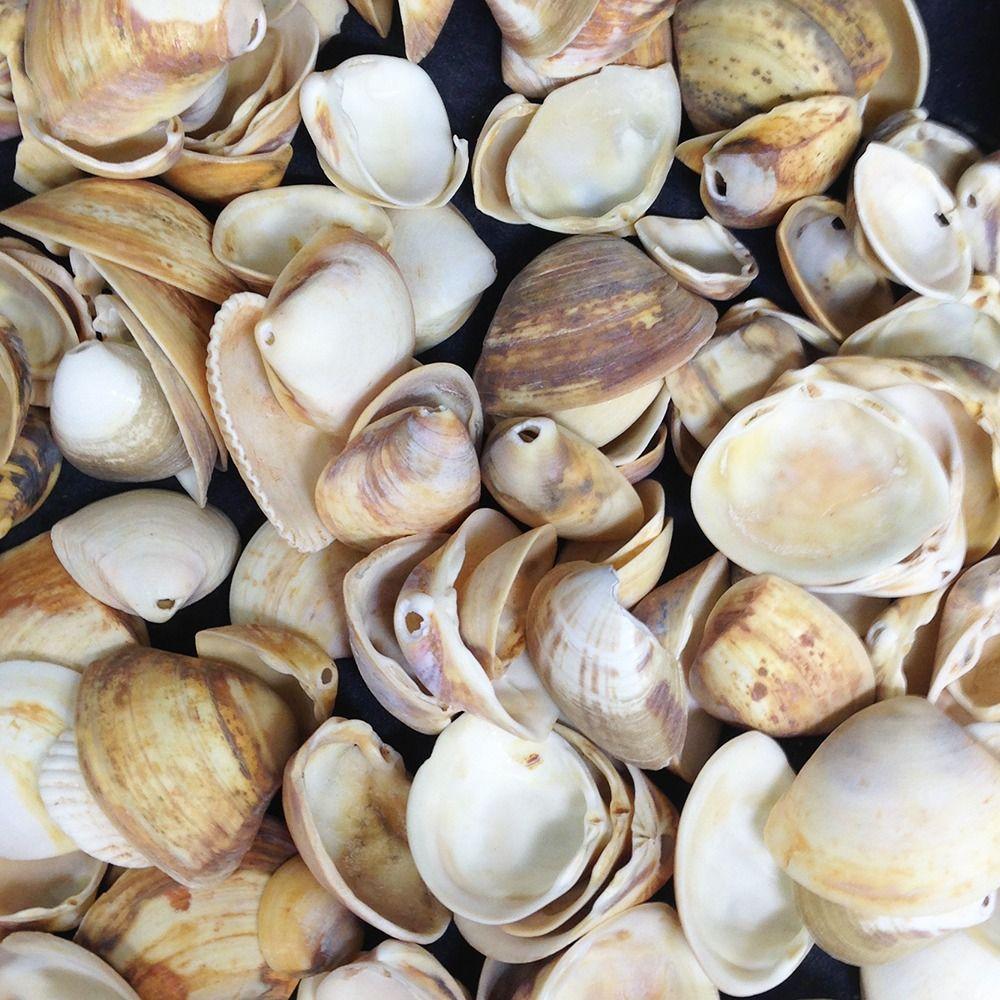 Decoração Feito Conchas Do Mar – Materiais e Vídeo
